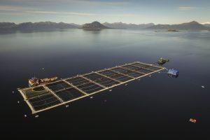 Extrabajador de Nova Austral acusa explotación laboral y prácticas ilegales de la empresa