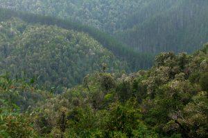 Terram lanza propuesta de directrices ambientales para una Nueva Constitución