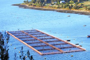 Transnacional noruega Marine Harvest intenta realizar el mayor fraude ambiental de la industria salmonera en Chile