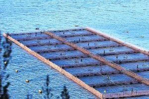 Far west salmonero: ¿Otra vez no aplicarán la ley a multinacional noruega por escape de peces?