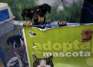 No compres en criaderos, adopta: Prohíben la venta de mascotas que vengan de criaderos en tiendas de California