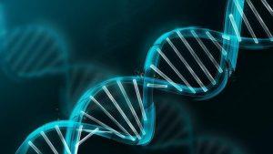 Identifican fragmentos de ADN que producen disfunción en el tejido mamario