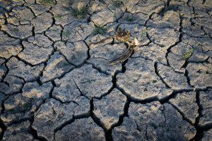 Chile se va secando: Aculeo está muerto