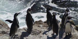 Dominga: Tribunal Ambiental acoge reclamación a favor del polémico proyecto