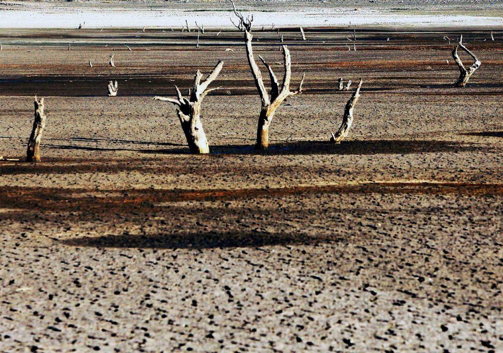 Análisis y propuestas de la sociedad al compromiso del Gobierno de Chile con el cambio climático