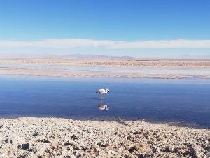 Explotación de Litio en Atacama: La amenaza ambiental a las comunidades indígenas