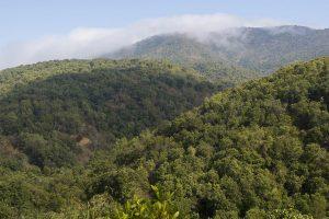 CONAF en la mira de la Contraloría por autorización de 3 planes de manejo para talar bosque nativo con fines agrícolas