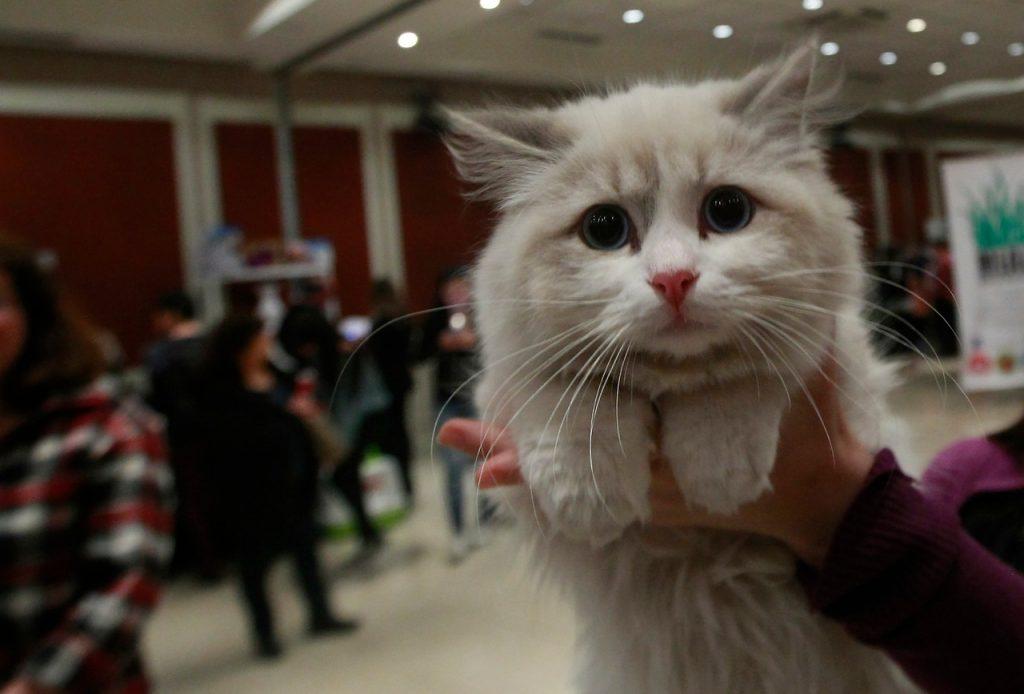 Condenan a cinco años de cárcel a británico que apuñaló a 16 gatos