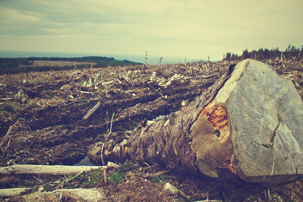 Países incumplen todos los objetivos para frenar la destrucción de la biodiversidad fijados para 2020
