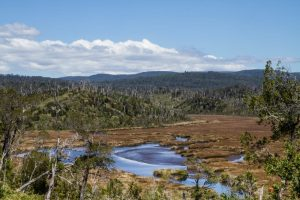 Los Lagos: Firman Decreto que crea Santuarios de la Naturaleza Humedales del Río Maullín y Humedales del Río Chepu