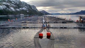 Contraloría dictamina que la Ley General de Pesca permite el desarrollo de actividad acuícola en reservas nacionales