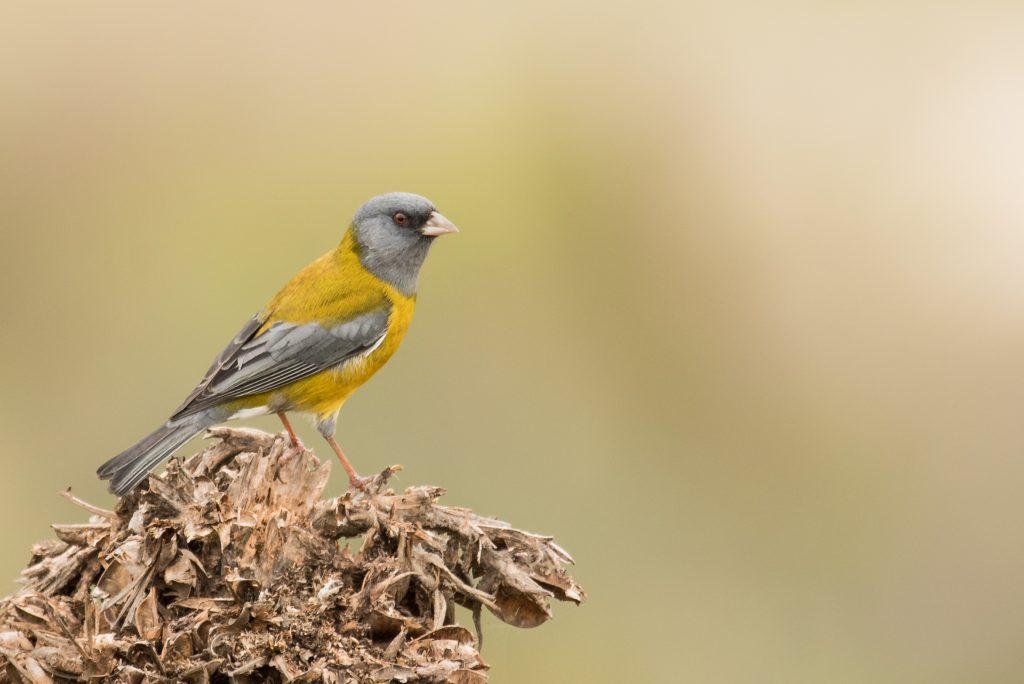 Video   ROC y el Museo-Bioacústico te muestran cómo grabar sonidos de aves con tu celular