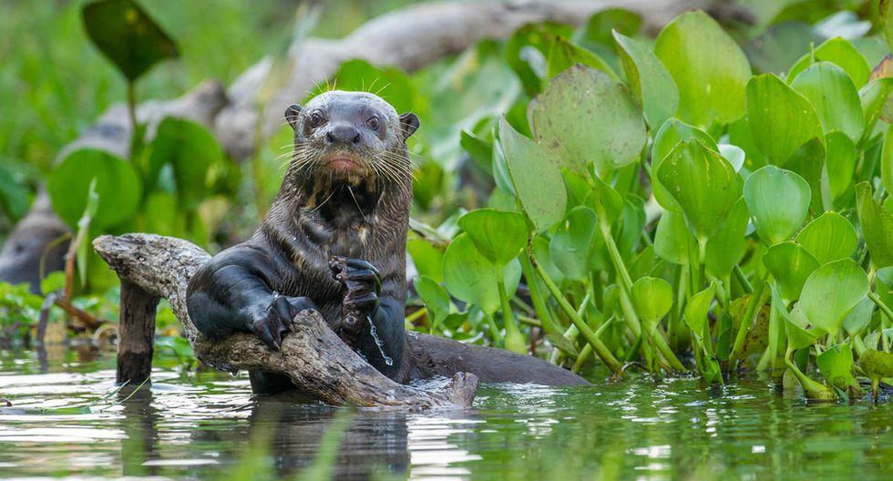 Fotos   Informe Planeta Vivo: América Latina y el Caribe enfrentan la mayor reducción de especies y hábitats