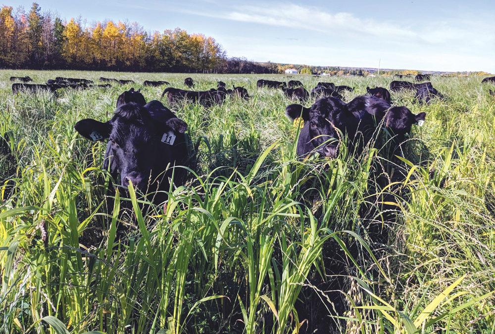 La ganadería regenerativa se abre paso en el mundo comercial y académico