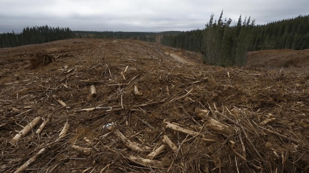 Opinión | Nueva Constitución y nueva visión país en materia ambiental