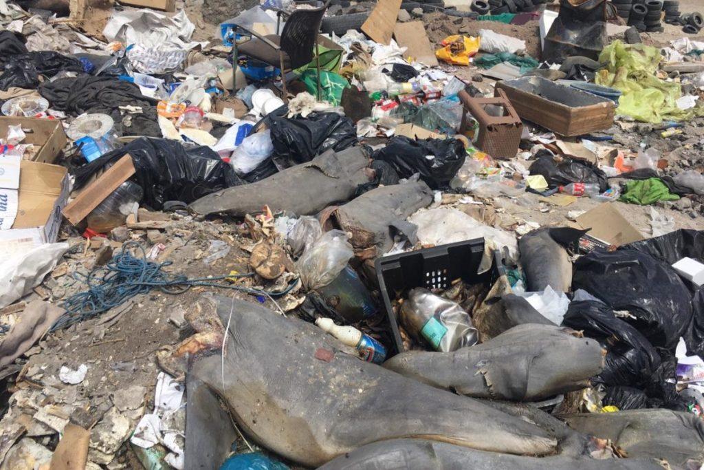 Antofagasta: ¿Qué pasó con los 17 tiburones en peligro hallados en un vertedero clandestino?
