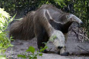 VIDEO | Los secretos de la fauna silvestre: las mejores cámaras trampa del 2020