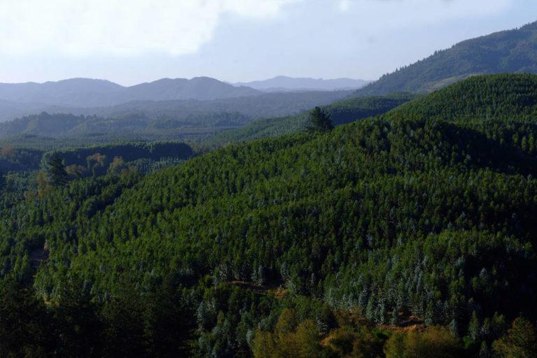 Brotes epidémicos tienen mayor probabilidad de ocurrencia en áreas deforestadas y en plantaciones de monocultivos