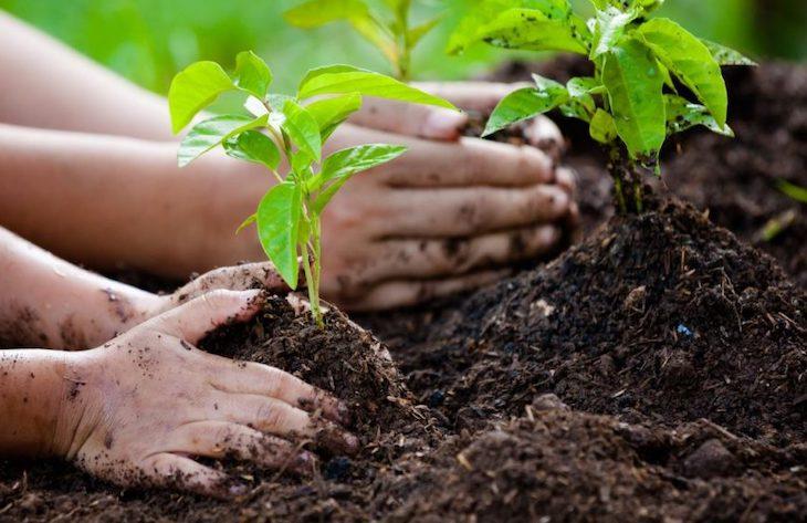 Municipio Verde: Más de 100 candidatas/os a alcaldías firman compromiso con el medioambiente