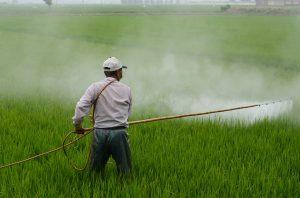 Ambientalistas alertan por la disminución de barreras para nuevos plaguicidas con cambio normativo del SAG
