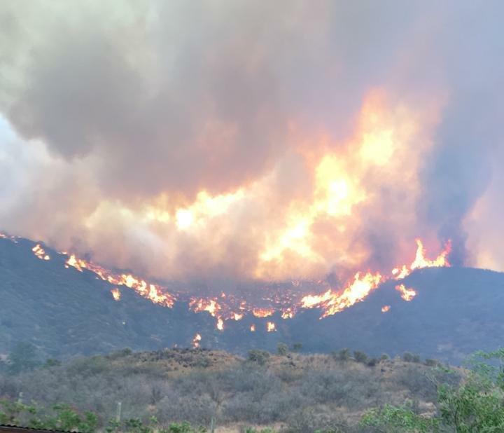 Incendio forestal en Curacaví está