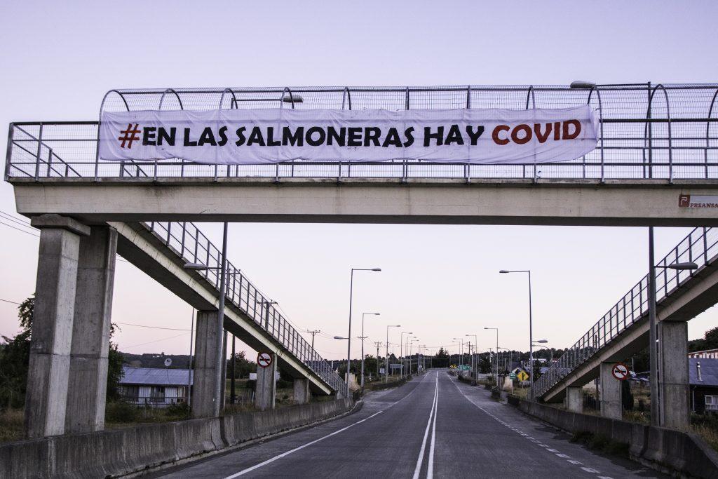 El cuestionado rol de las salmoneras en la crisis sanitaria de Quellón: Trabajadores denuncian incumplimiento de medidas sanitarias y despidos injustificados