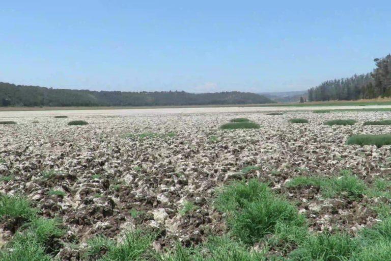 Humedal en Chile: ¿Por qué El Yali, cuna de las aves, está contaminado y seco?