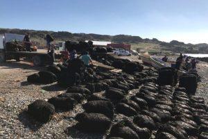 La cadena de infracciones detrás de la pesca ilegal de algas