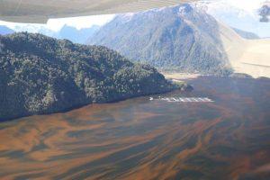 """Greenpeace por floración de algas nocivas: """"Es innegable la influencia de la contaminación producida por la salmonicultura"""""""