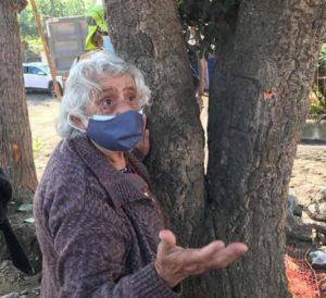 Talcahuano: Mujer de 89 años se aferró a alcornoque para evitar su tala
