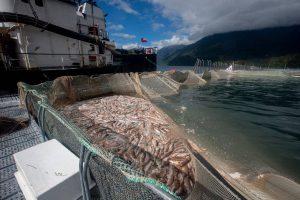"""Pescadores del Biobío: """"¿Por qué la región tiene que ser el basurero de una industria que ha demostrado ser altamente contaminante?"""""""