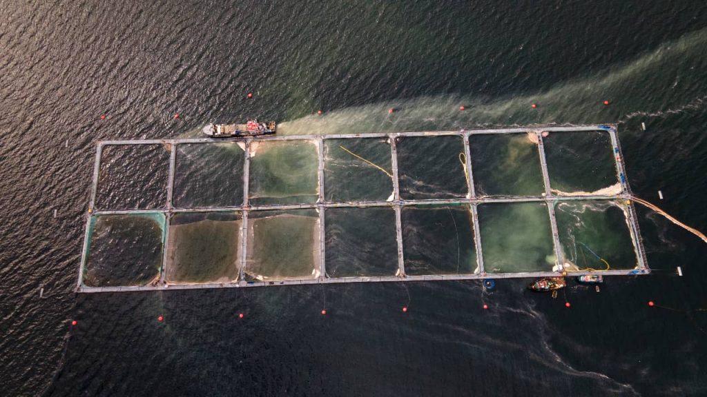 Desastre ambiental en el sur: Lanzan iniciativa contra la industria salmonera
