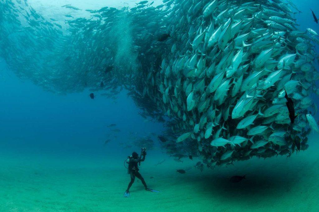 ¿Cómo salvar los océanos?: 52 proyectos que lo están logrando