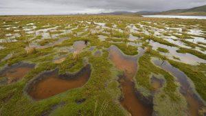 OPINIÓN | El rol de las turberas ante el cambio climático