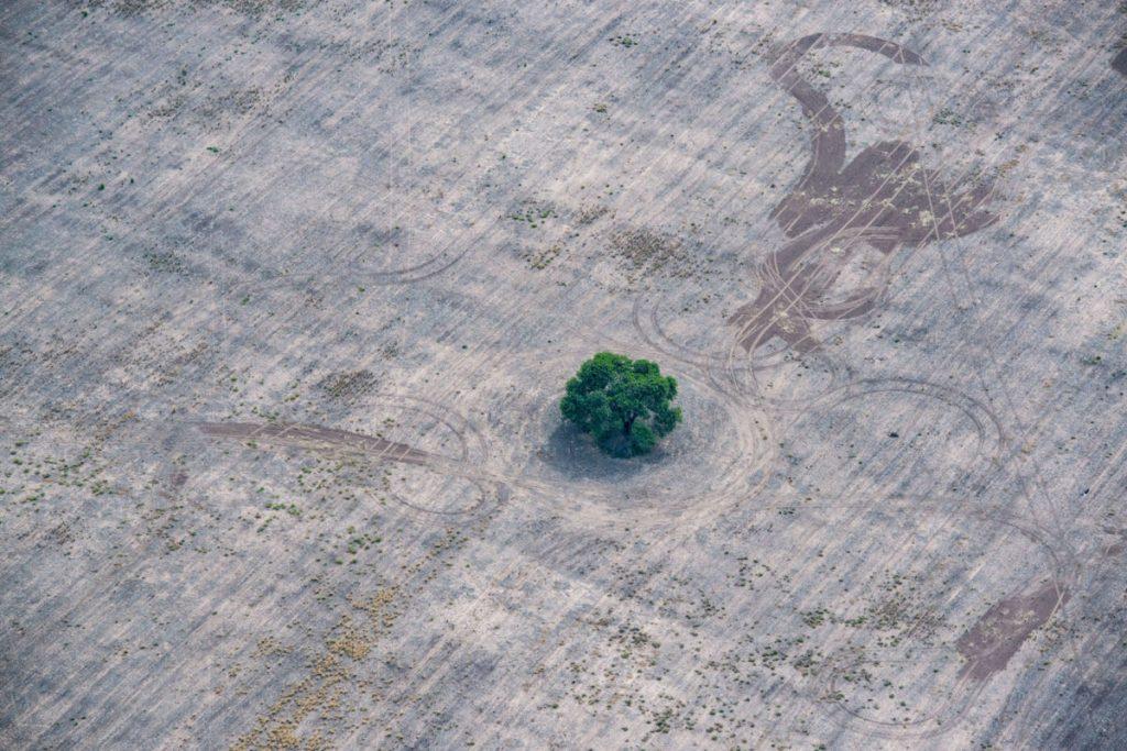 OPINIÓN | Si proteges el medioambiente, infórmate por quién votar y no seas cómplice de su destrucción