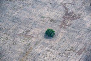 La deforestación aumentó en todo el planeta en 2020