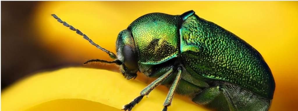 ¿Peligra la vida en la Tierra a causa de la pérdida de insectos?