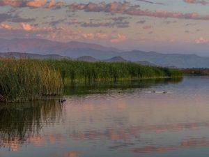 Laguna de Batuco es declarada Santuario de la Naturaleza