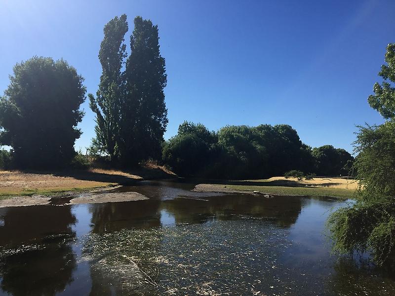 «Milagro, llegó el agua sin llover»: Reportan recuperación del caudal del río Cauquenes tras fiscalización y fin de la temporada de riego