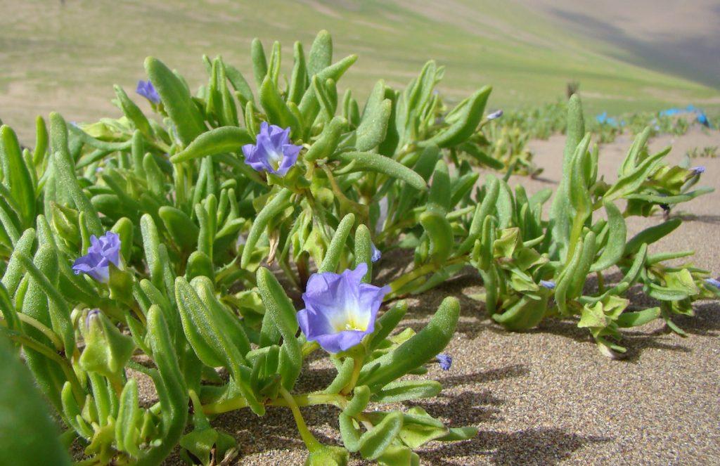 OPINIÓN | El desierto no florece para nosotros: reflexiones sobre intervenir la naturaleza