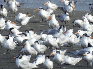 Día Mundial de las Aves Migratorias: buscando el vuelo directo hacia la conservación