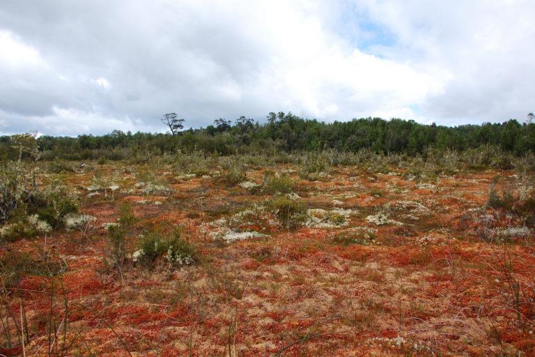 Explotación de turberas en Chile pone en peligro ecosistema clave para combatir el cambio climático   ENTREVISTA