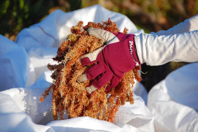 Más de 170 organizaciones llaman a aprobar Ley de Protección de Turberas