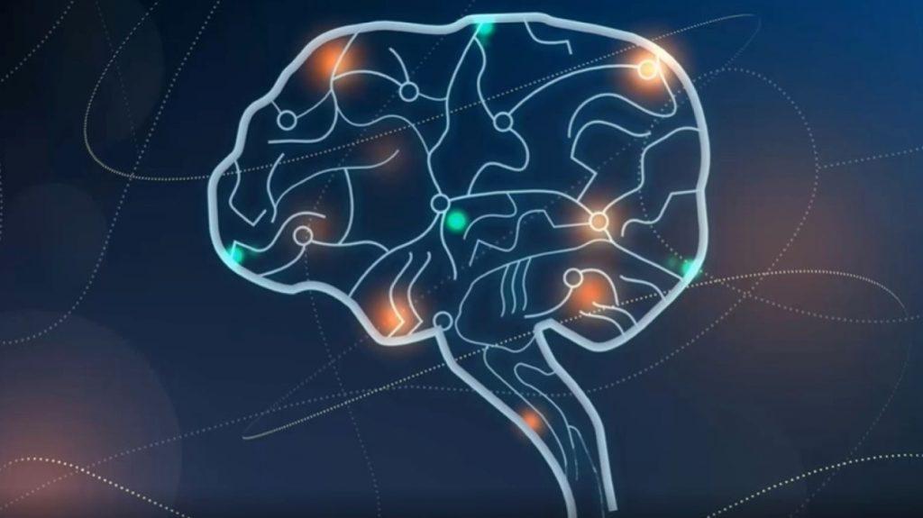 Descubren un nuevo mecanismo que explica la formación de la «memoria social»