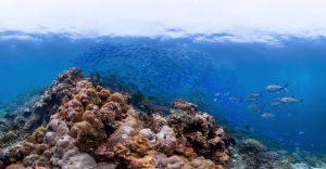 Corrientes trasladan microplásticos hacia hotspots de biodiversidad oceánica