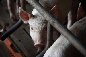 OPINIÓN | ¿Qué son los Derechos Animales?
