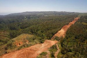 OPINIÓN   Evaluación de Impacto Ambiental para monocultivos forestales industriales