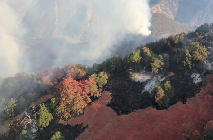 Preocupación en California por avance del incendio en Parque Nacional Secuoya