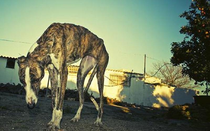 Estos son los 40 diputados que votaron en contra de prohibir las carreras de perros