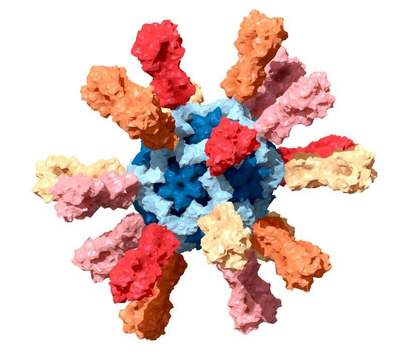 El coronavirus puede preceder al síndrome de Guillain-Barré en casos excepcionales
